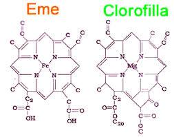 molecole clorofilla e ferro